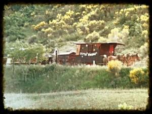 Circo-Bidone-carriage on road