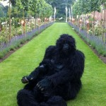 Gorillas in park, father and son
